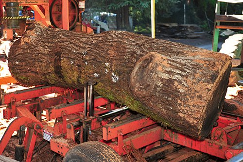 Positioning a log in saw mill bed with hydraulic lifts