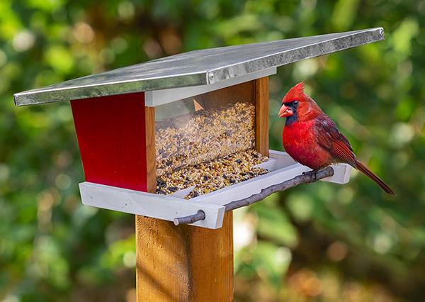 modern bird feeder with cardinal